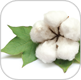 cotton-milk-img